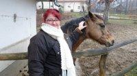Miskolc-zoo horse